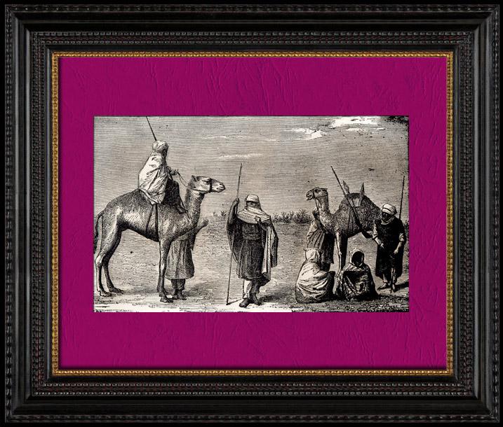 Gravures Anciennes & Dessins | Vue du Sahara - Désert - Afrique - Touaregs - Nomades pastoraux - Chameaux | Gravure sur bois | 1896