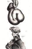 Anatomy - Buffon - Veterinary Medicine Pl.363