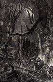 Selva - Tropischer Regenwald - Südamerika