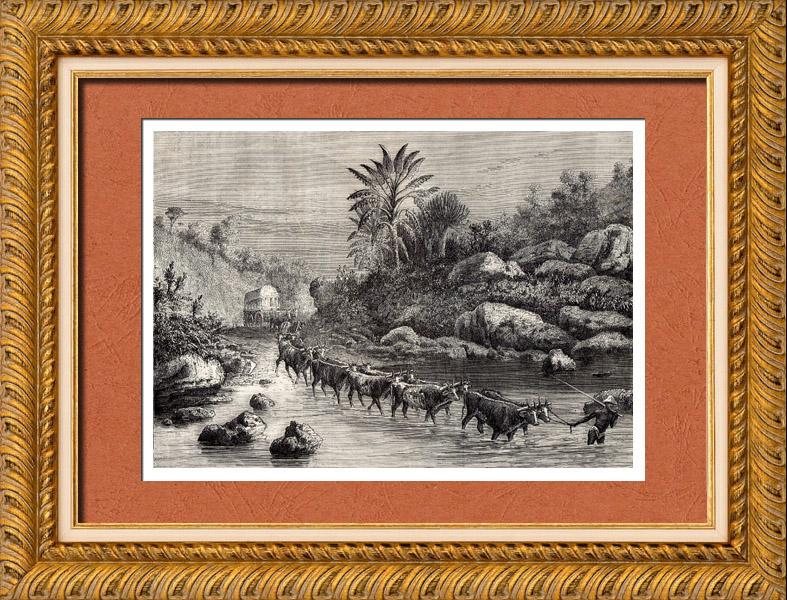 Gravures Anciennes & Dessins | Afrique  du Sud - Guerre Anglo Néerlandaise - Guerre des Boers | Gravure sur bois | 1882