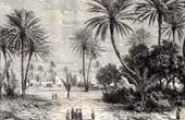 Ansicht von Sahara - Oase