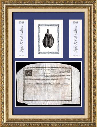 Altes Medizin Diplom in latein auf Pergament - Herrschaft von Ludwig XV von Frankreich - 1742 - NOS DOCTORES, LICENTIATI, CONSILIARII, BACCALAUREI ET STUDIOSI