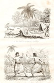 Tonga Islands - Kava on Namuka Bay - Scene of pugilism - Boxer - Wrestler