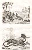 Antik etsning - Australien - Tasmanien - Australiens Aboriginer - Fiske Snäckskal - Pungmårdar - Pungdjur