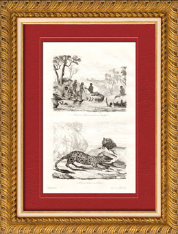 Australien - Tasmanien - Australiens Aboriginer - Fiske Sn�ckskal - Pungm�rdar - Pungdjur
