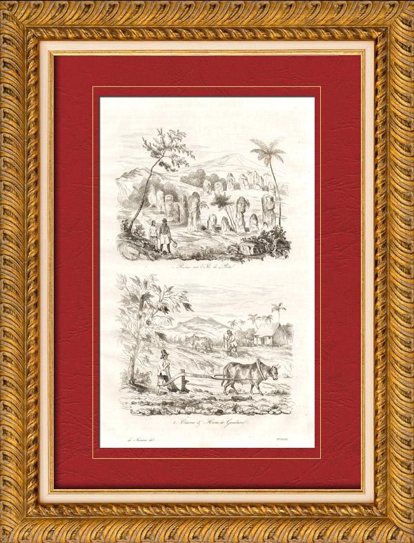 Gravures Anciennes & Dessins | Îles Mariannes - Guam - Ruines à Rota - Charrue et Herse à Guam - Agriculture | Taille-douce | 1835