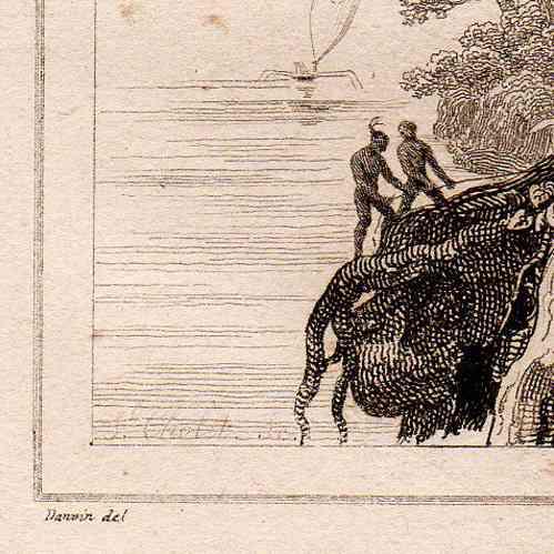 stampe antiche tonga albero gigantesco stampa calcografica 1836. Black Bedroom Furniture Sets. Home Design Ideas