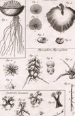 Molluskenwurm - Gleba - Helminthologie - 1791 - Tafel  89 - Panckoucke - Sammlung Diderots Enzyklop�die