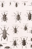 Insect - Entomology - 1797 - Plate 227 - Panckoucke - Collection of the Diderot's Encyclop�die