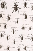 Insect - Entomology - 1797 - Plate 228 - Panckoucke - Collection of the Diderot's Encyclop�die