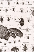 Insect - Entomology - 1797 - Plate 229 - Panckoucke - Collection of the Diderot's Encyclop�die