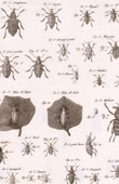 Insect - Entomology - 1797 - Plate 230 - Panckoucke - Collection of the Diderot's Encyclop�die