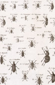 Insect - Entomology - 1797 - Plate 231 - Panckoucke - Collection of the Diderot's Encyclop�die