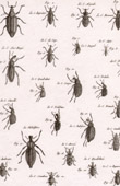 Insect - Entomology - 1797 - Plate 232 - Panckoucke - Collection of the Diderot's Encyclop�die
