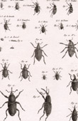 Insect - Entomology - 1797 - Plate 233 - Panckoucke - Collection of the Diderot's Encyclop�die