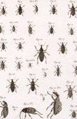 Insect - Entomology - 1797 - Plate 235 - Panckoucke - Collection of the Diderot's Encyclop�die