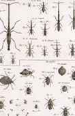 Insect - Entomology - 1797 - Plate 236 - Panckoucke - Collection of the Diderot's Encyclop�die
