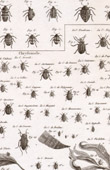 Insect - Entomology - 1797 - Plate 237 - Panckoucke - Collection of the Diderot's Encyclop�die