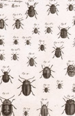 Insect - Entomology - 1797 - Plate 238 - Panckoucke - Collection of the Diderot's Encyclop�die