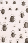 Insect - Entomology - 1797 - Plate 239 - Panckoucke - Collection of the Diderot's Encyclop�die