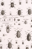 Insect - Entomology - 1797 - Plate 240 - Panckoucke - Collection of the Diderot's Encyclop�die