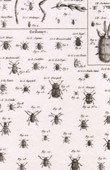 Insect - Entomology - 1797 - Plate 241 - Panckoucke - Collection of the Diderot's Encyclop�die