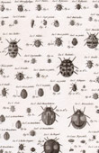 Insect - Entomology - 1797 - Plate 244 - Panckoucke - Collection of the Diderot's Encyclop�die