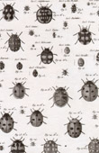 Insect - Entomology - 1797 - Plate 245 - Panckoucke - Collection of the Diderot's Encyclop�die
