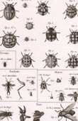 Insect - Entomology - 1797 - Plate 246 - Panckoucke - Collection of the Diderot's Encyclopédie