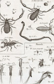 Insect - Entomology - 1797 - Plate 263 - Panckoucke - Collection of the Diderot's Encyclop�die