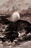Marine Mammals - Bowhead whale (Balaena mysticetus)