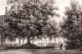 Ecouen Castle (France) - Garden - Constable Tree