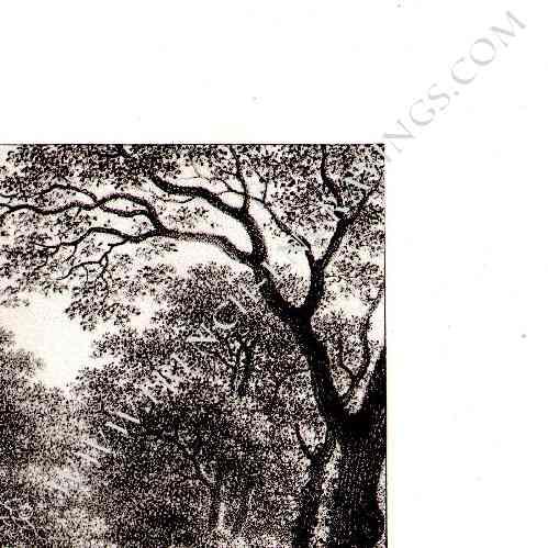 grabados antiguos cacer a de ciervo en selva de compi gne oise picard a francia. Black Bedroom Furniture Sets. Home Design Ideas