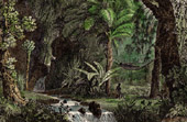 View of French Guiana (French overseas department) - Forest