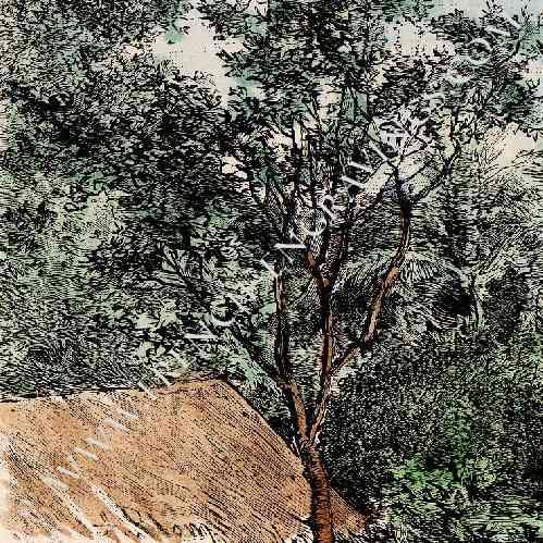 gravures anciennes paysage du mato grosso amazonie br sil gravure sur bois 1894. Black Bedroom Furniture Sets. Home Design Ideas