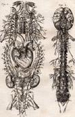 Medicine - Anatomy - 1779 - Neurology - Vertebral Column