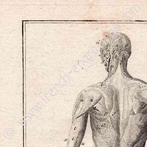 Gravures anciennes m decine anatomie 1779 corps for Anatomie du meuble