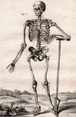 M�decine - Anatomie - 1779 - Squelette