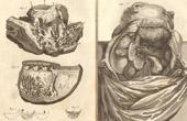Médecine - Anatomie - 1779 - Coeur