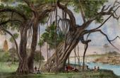 Stich von Hinduismus - Baniansbaum (Indien)