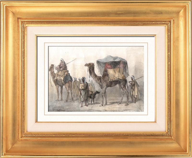 Gravures Anciennes & Dessins | Chameaux et Dromadaires sellés pour le transport des voyageurs (Egypte) | Taille-douce | 1848