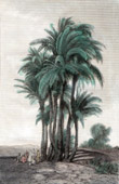 Palm trees (Egypt)