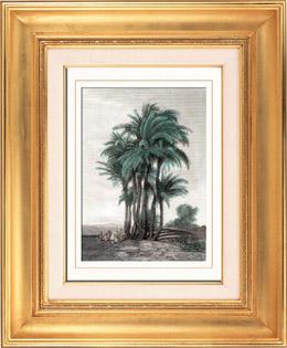 Palmen (Ägypten)
