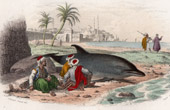 Animals - Dolphin - Cetacea - Aquatic mammals