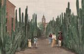 Village in Mexico - Street - Cactus