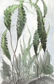 Wasserpflanze in der Zirkumpolare