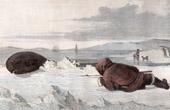 Stich von Robbenjagd - Eskimo (Grönland)