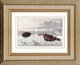 Robbenjagd - Eskimo (Gr�nland)