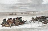 Stich von Eskimo - Schlitten - Schlidde (Zirkumpolare)