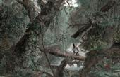 Ansicht von Gran Chaco - Urwald (Argentinien - Bolivien - Paraguay - Brasilien)